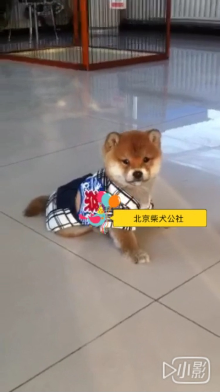 将之铭枫号(已售北京)